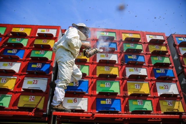 A man produces natural honey with bees in an articulated lorry